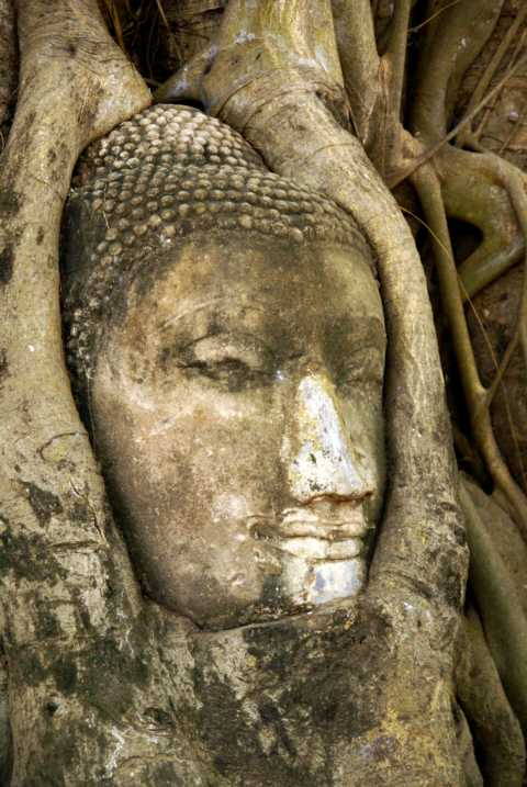 treebuddha.JPG